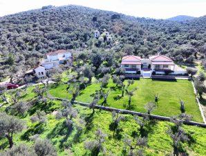 Gera's Olive Grove (Elaionas Tis Geras) – Μυτιλήνη